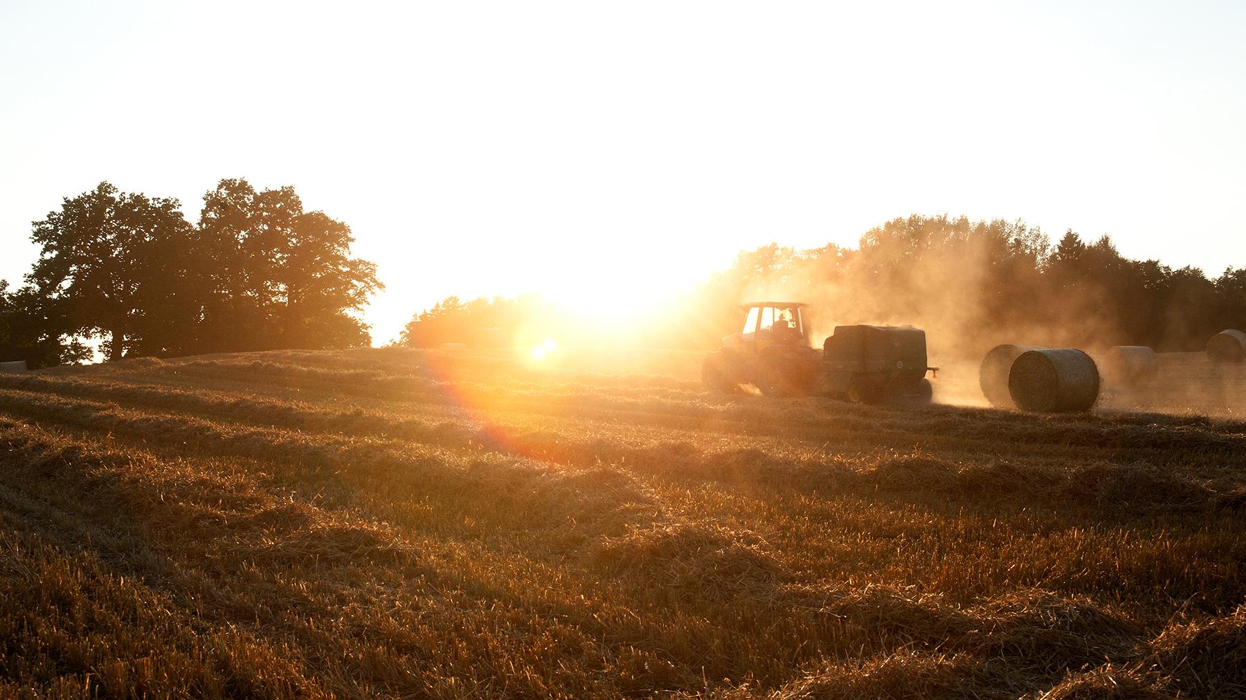 Feldarbeit bei Sonnenuntergang