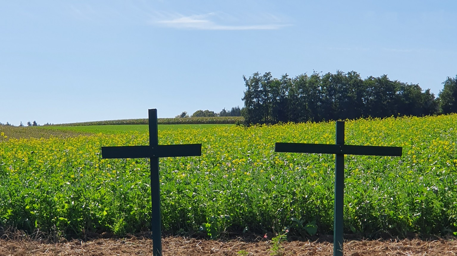 Grünes Kreuz Feld